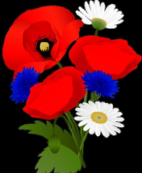красный мак, васильки, ромашка, полевые цветы, букет цветов, зеленое растение, красные маки, флора, цветы, red poppy, cornflower, chamomile, wildflowers, bouquet of flowers, green plant, red poppies, flowers, rote mohnblume, kornblume, kamille, wildblumen, blumenstrauß, grüne pflanze, rote mohnblumen, blumen, pavot rouge, bleuet, camomille, fleurs sauvages, bouquet de fleurs, plante verte, coquelicots rouges, flore, fleurs, amapola roja, manzanilla, ramo de flores, amapolas rojas, papavero rosso, fiordaliso, camomilla, fiori di campo, bouquet di fiori, pianta verde, papaveri rossi, fiori, papoila vermelha, aciano, camomila, flores silvestres, buquê de flores, planta verde, papoilas vermelhas, flora, flores, червоний мак, волошки, польові квіти, букет квітів, зелена рослина, червоні маки, квіти