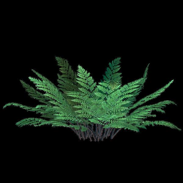 папоротник, зеленый папоротник, куст папоротника, природа, трава, зеленое растение, fern, green fern, bush fern, grass, green plant, farne, grüne farne, farn busch, natur, gras, grünpflanze, fougères, fougères vert, fougère buisson, nature, herbe, plante verte, helechos, helechos verdes, helecho arbusto, naturaleza, hierba, felci, felci verdi, felce cespuglio, natura, erba, pianta verde, samambaias, samambaias verdes, arbusto samambaia, natureza, grama, planta verde