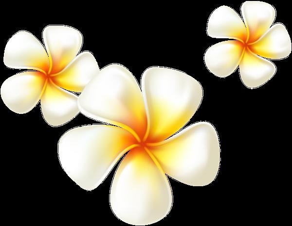 цветы, белый цветок, flowers, white flower, spring, blumen, weiße blumen, frühling, fleurs, fleur blanche, printemps, flor blanca, fiori, fiore bianco, flores, flor branca, primavera, квіти, біла квітка, весна