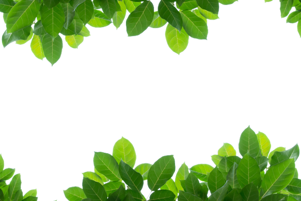 зеленый лист, ветка с зелеными листьями, листья деревьев, green leaf, branch with green leaves, leaves of trees, grünes blatt, zweig mit grünen blättern, laub, feuille verte, branche avec des feuilles vertes, feuilles, hoja verde, rama con hojas verdes, hojas, verde foglia, ramo con foglie verdi, foglie, folha verde, ramo com folhas verdes, folhas
