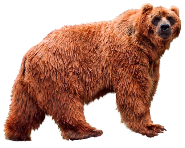 медведь, бурый медведь, медведь гризли, bear, brown bear, grizzly bear, bär, braunbär, grizzlybär, ours, ours brun, ours grizzly, oso, oso pardo, orso, orso bruno, orso grizzly, urso, urso marrom, urso de urso