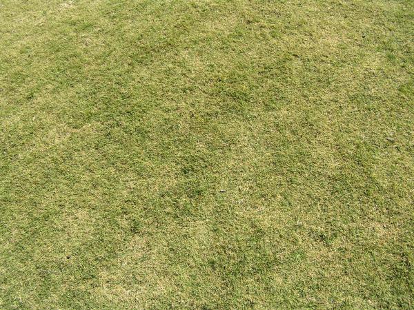 зеленая трава, текстура природа, texture nature, green grass, textur natur, grünes gras, nature texture, herbe verte, textura de la naturaleza, la hierba verde, tessitura natura, erba verde, textura natureza, grama verde, зелена трава, экология, екологія, ecology, ökologie, l'écologie, ecología, ecologia