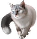 фауна, животные, кот, кошка, tier, katze, faune, chat, animal, gato, fauna, animale, gatto
