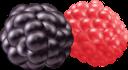 ежевика, малина, еда, ягоды, blackberries, raspberries, food, berries, brombeeren, himbeeren, lebensmittel, beeren, mûres, framboises, nourriture, baies, moras, frambuesas, comida, bayas, more, lamponi, cibo, frutti di bosco, ожина, їжа, ягоди