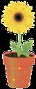 вазон, цветочный горшок, цветок желтая гербера, flower pot, flower yellow gerbera, blumentopf, blumen gelbe gerbera, vase, pot de fleur, fleur gerbera jaune, florero, maceta, flor amarilla del gerbera, vaso di fiori, fiori gerbera gialla, vaso, vaso de flores, gerbera flor amarela
