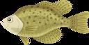 окунь, речная рыба, рыбы, морепродукты, perch, river fish, fish, seafood, barsch, flussfisch, fisch, meeresfrüchte, perche, poisson de rivière, poisson, fruits de mer, perca, pescado de río, pescado, marisco, pesce persico, pesce di fiume, pesce, frutti di mare, poleiro, peixe do rio, peixe, frutos do mar, річкова риба, риби, морепродукти