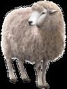 фауна, животные, парнокопытные, овца, баран, animals, cloven-hoofed, sheep, tiere, paarhufig, schafe, faune, animaux, artiodactyles, moutons, animales, de pezuña hendida, ovejas, carnero, animali, ungulati, pecore, fauna, animais, biungulados de caça, carneiros, ram