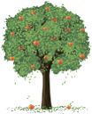 яблоня, дерево, зеленое растение, флора, tree, green plant, baum, grüne pflanze, arbre, plante verte, flore, árbol, albero, pianta verde, árvore, planta verde, flora, зелена рослина