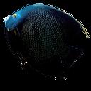 черная рыбка, морская рыба, black fish, sea fish, schwarze fisch, meeresfisch, poisson noir, poissons d'eau salée, pescados negro, peces de agua salada, pesce nero, pesci di mare, peixes pretos, peixes de água salgada