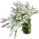 цветы подснежники, белые цветы, букет цветов, букет подснежников, flowers snowdrops, white flowers, a bouquet of flowers, a bouquet of snowdrops, schneeglöckchen blumen, weiße blumen, blumenstrauß, strauß schneeglöckchen, snowdrops fleurs, fleurs blanches, bouquet de fleurs, bouquet de perce-neige, flores campanillas blancas, flores blancas, ramo de flores, ramo de campanillas de invierno, bucaneve fiori, fiori bianchi, bouquet di fiori, bouquet di bucaneve, snowdrops flores, flores brancas, buquê das flores, buquê de snowdrops