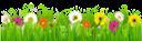 ромашка, ромашковое поле, трава, ромашка луговая, полевые цветы, божья коровка, пчела, chamomile, chamomile field, grass, chamomile meadow, wildflowers, ladybug, bee, kamille, kamille feld, gras, kamille wiese, wildblumen, marienkäfer, biene, camomille, champ de camomille, herbe, prairie de camomille, fleurs sauvages, coccinelle, abeille, manzanilla, campo de la manzanilla, hierba, prado de manzanilla, mariquita, abeja, camomilla, campo di camomilla, erba, prato di camomilla, fiori di campo, coccinella, ape, camomila, campo de camomila, grama, prado de camomila, flores silvestres, joaninha, abelha, ромашкове поле, ромашка лугова, польові квіти, сонечко, бджола