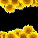 подсолнух, цветы подсолнуха, желтый цветок, рамка для фотошопа, цветы, желтые подсолнухи, sunflower, sunflower flowers, yellow flower, frame for photoshop, flowers, yellow sunflowers, sonnenblumen, sonnenblumen blumen, gelbe blume, rahmen photoshop, blumen, gelbe sonnenblumen, tournesols, fleurs de tournesol, fleur jaune, photoshop cadre, fleurs, tournesols jaunes, girasoles, flores de girasol, flor amarilla, photoshop marco, girasoles amarillos, girasole, fiori di girasole, fiore giallo, cornice photoshop, fiori, girasoli gialli, girassóis, flores de girassol, flor amarela, photoshop moldura, flores, girassóis amarelos, соняшник, квіти соняшника, жовта квітка, рамка для фотошопу, квіти, жовті соняшники