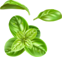 зелень, зеленый лист, овощи, продукты питания, зеленое растение, еда, специи, зеленый, greens, green leaf, vegetables, green plant, food, seasoning, spices, green, grüns, grünes blatt, gemüse, grüne pflanze, lebensmittel, gewürze, grün, verts, feuille verte, légumes, nourriture, plante verte, alimentaire, assaisonnement, épices, vert, hoja verde, planta verde, comida, condimentos, especias, foglia verde, verdure, pianta verde, cibo, condimento, spezie, verde, verduras, folhas verdes, vegetais, plantas verdes, alimentos, temperos, especiarias, verdes, зелений лист, овочі, продукти харчування, зелена рослина, їжа, приправа, спеції, зелений