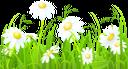 ромашка, ромашковое поле, трава, ромашка луговая, полевые цветы, chamomile, chamomile field, grass, meadow, field flowers, kamille, kamille feld, gras, gänseblümchen, wiese, feld blumen, camomille, champ de camomille, herbe, daisy, pré, fleurs de champ, manzanilla, campo de la manzanilla, hierba, margarita, flores del campo, camomilla, campo di camomilla, erba, margherita, prato, fiori di campo, camomila, campo de camomila, grama, margarida, prado, flores de campo, ромашкове поле, ромашка лугова, польові квіти