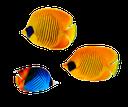 желтая морская рыбка, рыба, коралловый атолл, океаническая рыба, морская рыба, полосатая рыба бабочка, yellow sea fish, fish, coral atoll, ocean fish, saltwater fish, striped fish butterfly, gelb seefisch, fisch, korallenatoll, meeresfische, meeresfisch, gestreiften fisch schmetterling, jaune poissons de mer, poissons, atoll de corail, les poissons de mer, poissons d'eau salée, papillon de poisson rayé, pez amarillo mar, pescados, atolón de coral, peces marinos, peces de agua salada, peces mariposa rayada, pesce giallo di mare, pesce, atollo di corallo, pesci oceano, pesci di mare, pesci farfalla a strisce, peixe amarelo mar, peixes, atol de coral, peixes do oceano, peixes de água salgada, borboleta peixe listrado