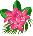франжипани, плюмерия, цветок плюмерии, цветок франжипании, тропические цветы, распустившийся цветок, зеленое растение, цветы, флора, plumeria flower, frangipani flower, tropical flowers, blooming flower, green plant, flowers, plumeria-blume, frangipani-blume, tropische blumen, blühende blume, grüne pflanze, blumen, frangipanier, fleur de plumeria, fleur de frangipanier, fleurs tropicales, fleur en fleurs, plante verte, fleurs, flore, flores tropicales, flor en flor, fiore di plumeria, fiore di frangipani, fiori tropicali, fiore che sboccia, pianta verde, fiori, frangipani, plumeria, flor de plumeria, flor de frangipani, flores tropicais, flor de florescência, planta verde, flores, flora, франжіпані, плюмерія, квітка плюмерії, квітка франжіпані, тропічні квіти, розквітла квітка, зелена рослина, квіти