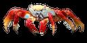 краб, членистоногие, ракообразные, десятиногие ракообразные, морские ракообразные, красный краб, crab, arthropods, crustaceans, decapod crustaceans, marine crustaceans, red crab, krabben, arthropoden, krustentiere, decapodkrebstiere, meereskrustentiere, rote krabbe, crabe, arthropodes, crustacés, crustacés décapodes, crustacés marins, le crabe rouge, cangrejo, artrópodos, crustáceos decápodos, crustáceos marinos, cangrejo rojo, granchio, artropodi, crostacei, decapodi, crostacei marini, granchi rossi, caranguejo, artrópodes, crustáceos, crustáceos decápodes, crustáceos marinhos, caranguejo vermelho