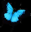 красивая бабочка, бабочка, разноусые чешуекрылые, butterfly, schmetterling, lepidoptera raznousye, papillon, lépidoptères raznousye, mariposa, lepidópteros raznousye, farfalla, raznousye lepidotteri, borboleta, raznousye lepidoptera