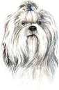 собака, ши-тцу, домашние животные, фауна, dog, shih tzu, pets, hund, haustiere, chien, animaux domestiques, faune, perro, mascotas, cane, animali domestici, cão, animais de estimação, fauna, пес, домашні тварини