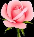 цветок розы, розовая роза, розовый цветок, цветы, зеленое растение, флора, flower roses, pink rose, pink flower, flowers, green plant, blumenrosen, rosa rose, rosa blume, blumen, grüne pflanze, roses fleuries, rose rose, fleur rose, fleurs, plante verte, flore, rosas de flores, rose di fiori, fiori rosa, fiori, piante verdi, flor rosas, rosa rosa, flor rosa, flores, planta verde, flora, квітка троянди, рожева троянда, рожева квітка, квіти, зелена рослина