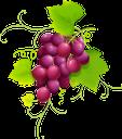 виноград, гроздь винограда, винная ягода, виноделие, красный виноград, grapes, bunch of grapes, wine berry, red grapes, trauben, weintrauben, weinbeeren, weinbereitung, rote trauben, raisins, grappe de raisin, baie de vin, vinification, raisins rouges, racimo de uvas, bayas de vino, vinificación, uvas rojas, uva, grappolo d'uva, bacca di vino, vinificazione, uva rossa, uvas, cacho de uvas, vinho berry, winemaking, uvas vermelhas, гроно винограду, винна ягода, виноробство, червоний виноград