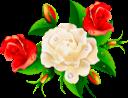 красная роза, белая роза, цветок розы, бутон розы, цветы, роза, зеленое растение, red rose, white rose, rose flower, flowers, green plant, rote rose, weiße rose, rose blume, rosebud, blumen, grüne pflanze, rose rouge, rose blanche, fleur rose, bouton de rose, fleurs, flore, rose, plante verte, rosa roja, rosa blanca, capullo de rosa, rosa rossa, rosa bianca, fiore rosa, bocciolo di rosa, fiori, pianta verde, rosa vermelha, rosa branca, rosa flor, flores, flora, rosa, planta verde, червона троянда, біла троянда, квітка троянди, бутон троянди, квіти, флора, троянда, зелена рослина