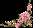 розовая роза, цветы, pink rose, flowers, rosa rose, blumen, rose rose, fleurs, fiori, rosa rosa, flores, рожева троянда, квіти
