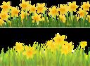 цветок нарцисса, желтый цветок, нарцисс, лужайка, цветы, флора, желтый, daffodil flower, yellow flower, daffodil, lawn, grass, flowers, yellow, narzissenblume, gelbe blume, narzisse, rasen, gras, blumen, gelb, fleur de jonquille, fleur jaune, jonquille, pelouse, herbe, fleurs, flore, jaune, flor de narciso, flor amarilla, césped, hierba, amarillo, fiore narciso, fiore giallo, giunchiglia, prato, erba, fiori, giallo, flor narciso, flor amarela, narciso, gramado, grama, flores, flora, amarelo, квітка нарциса, жовта квітка, нарцис, галявина, трава, квіти, жовтий