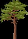 ёлка, ель, сосна, хвойное дерево, хвоя, зеленое растение, дерево, spruce, pine, conifer, needles, green plant, tree, fichte, kiefer, nadelbaum, nadeln, grüne pflanze, baum, épinette, pin, conifère, aiguilles, plante verte, arbre, agujas, árbol, abete rosso, pino, conifera, aghi, pianta verde, albero, abeto, pinho, conífera, agulhas, planta verde, árvore, ялинка, ялина, хвойне дерево, зелена рослина