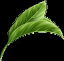 лист тропической пальмы, зеленый лист, пальмовый лист, флора, листья, зеленый, leaf of a tropical palm tree, green leaf, palm leaf, leaves, green, blatt einer tropischen palme, grünes blatt, palmblatt, blätter, grün, feuille d'un palmier tropical, feuille verte, feuille de palmier, flore, feuilles, vert, hoja de una palmera tropical, hoja verde, hoja de palma, hojas, foglia di una palma tropicale, foglia verde, foglia di palma, foglie, folha de uma palmeira tropical, folha verde, folha de palmeira, flora, folhas, verde, лист тропічної пальми, зелений лист, пальмовий лист, листя, зелений