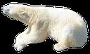 белый медведь, хищник, полярный медведь, predator, polar bear, eisbär, räuber, der eisbär, ours, prédateur, l'ours polaire, oso polar, depredador, el oso polar, orso polare, predatore, l'orso polare, urso polar, predador, o urso polar, білий ведмідь, хижак, полярний ведмідь