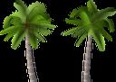 пальма, тропическая пальма, тропические растения, дерево пальмы, зеленое растение, дерево, лето, отдых, путешествия, tropical palm, tropical plants, palm tree, green plant, tree, summer, beach, vacation, tourism, travel, tropische palme, tropische pflanzen, palme, grüne pflanze, baum, sommer, strand, urlaub, tourismus, reisen, palm, palmier tropical, plantes tropicales, palmier, plante verte, arbre, été, plage, vacances, tourisme, voyage, palmera tropical, plantas tropicales, palmera, árbol, verano, playa, vacaciones, viajar, palma tropicale, piante tropicali, palma, pianta verde, albero, estate, spiaggia, vacanza, viaggio, palmeira tropical, plantas tropicais, palmeira, planta verde, árvore, verão, praia, férias, turismo, viagem, тропічна пальма, тропічні рослини, дерево пальми, зелена рослина, літо, пляж, відпочинок, туризм, подорожі