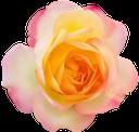 розовая роза, бутон розы, цветок розы, розовые розы, цветы, розовый, роза, флора, pink rose, rosebud, rose flower, pink roses, flowers, pink, rosarose, rosenknospe, rosenblüte, rosa rosen, blumen, rose rose, bouton de rose, fleur rose, roses roses, fleurs, rose, flore, capullo de rosa, flor de rosa, rosas rosadas, bocciolo di rosa, fiore rosa, rose rosa, fiori, rosa rosa, flor rosa, rosas cor de rosa, flores, rosa, flora, рожева троянда, бутон троянди, квітка троянди, рожеві троянди, квіти, рожевий, троянда