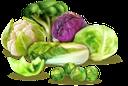 капуста краснокочанная, красная капуста, цветная капуста, пекинская капуста, брокколи, брюсельская капуста, белокачанная капуста, капуста, овощи, red cabbage, cauliflower, beijing cabbage, brussels sprouts, white cabbage, cabbage, vegetables, rotkohl, blumenkohl, pekinger kohl, brokkoli, rosenkohl, weißkohl, kohl, gemüse, chou rouge, chou-fleur, chou de pékin, brocoli, choux de bruxelles, chou blanc, chou, légumes, repollo rojo, coliflor, repollo de beijing, brócoli, coles de bruselas, repollo blanco, repollo, verduras, cavolo rosso, cavolfiore, cavolo di pechino, broccoli, cavoletti di bruxelles, cavolo bianco, cavolo, verdure, repolho roxo, couve roxa, couve-flor, couve de pequim, brócolis, couve de bruxelas, couve branca, couve, legumes, капуста червонокачанна, червона капуста, цвітна капуста, пекінська капуста, брокколі, брюсельська капуста, білокачанна капуста, овочі