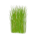 стебли зеленой травы, зеленая трава, зеленое растение, green grass, green plant, grünes gras, grünpflanze, herbe verte, plante verte, hierba verde, erba verde, pianta verde, grama verde, planta verde