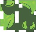 зеленый чай, зеленый лист, экологический чай, green tea, green leaf, ecological tea, grüner tee, grünes blatt, tee ökologischer, thé vert, feuille vert, thé écologique, el té verde, hoja verde, té ecológico, tè verde, foglia verde, tè ecologico, chá verde, folha verde, chá ecológica, зелений чай, зелений лист, екологічний чай