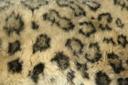текстура мех, шкура леопарда, texture fur, leopard skin, textur des pelzes, leopardenfell, la texture de la fourrure, peau de léopard, textura de la piel, piel de leopardo, texture della pelliccia, pelle di leopardo, textura da pele, pele de leopardo, текстура хутро, шкіра леопарда