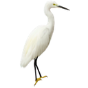 цапля, белая цапля, птица с длинным клювом, a bird with a long beak, reiher, ein vogel mit einem langen schnabel, héron, un oiseau avec un long bec, heron, fugl með langa gogginn, garza, un pájaro con un pico largo, airone, la garzetta, un uccello con un lungo becco, garça real, egret, um pássaro com um bico longo