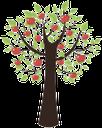 дерево, зеленое растение, яблоня, яблоко, tree, green plant, apple, baum, grüne pflanze, apfel, arbre, plante verte, pomme, árbol, manzana, albero, pianta verde, mela, árvore, planta verde, maçã, зелена рослина, яблуня, яблуко
