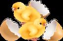 цыпленок, курица, маленький цыпленок, цыпленок курицы, детеныш курицы, желтый цыпленок, домашние птицы, отряд пернатых, пернатые, птицы, chicken, little chicken, chicken chicken, chicken cubs, yellow chicken, poultry, birds, huhn, kleines huhn, huhn huhn, huhn jungtier, gelbes huhn, geflügel, gefiederte truppe, gefiedert, vögel, poulet, petit poulet, poulet poulet, poulet cub, poulet jaune, volaille, oiseaux, pollo pequeño, pollo pollo, cachorro de pollo, pollo amarillo, aves de corral, pájaros, gallinella, pollo, cuccioli di pollo, pollo giallo, pollame, uccelli, frango, frango pequeno, frango frango, filhotes de frango, frango amarelo, aves, pássaros, курча, курка, маленьке курча, курча курки, дитинча курки, жовте курча, свійські птахи, загін пернатих, пернаті, птиці