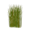 зеленые листья камыша, болотная трава, камыш, green leaves of reeds, marsh grass, reeds, grüne blätter schilf, sumpfgras, binsen, feuilles vertes roseaux, herbe de marais, massette, hojas verdes juncos, hierba del pantano, foglie verdi canne, erbe palustri, giunco, folhas verdes juncos, grama do pântano, junco