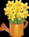 цветок нарцисса, желтый цветок, нарцисс, лейка, букет цветов, цветы, флора, желтый, daffodil flower, yellow flower, daffodil, watering can, bouquet of flowers, flowers, yellow, narzissenblume, gelbe blume, narzisse, gießkanne, blumenstrauß, blumen, gelb, fleur de jonquille, fleur jaune, jonquille, arrosoir, bouquet de fleurs, fleurs, flore, jaune, flor amarilla, regadera, ramo de flores, amarillo, fiore narciso, fiore giallo, giunchiglia, annaffiatoio, mazzo di fiori, fiori, giallo, flor de narciso, flor amarela, narciso, rega, buquê de flores, flores, flora, amarelo, квітка нарциса, жовта квітка, нарцис, лійка, букет квітів, квіти, жовтий