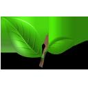 tea green leaf