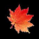 красный кленовый лист, осень, канада, red maple leaf, autumn, rotes ahornblatt, herbst, kanada, feuille d'érable rouge, automne, hoja de arce rojo, otoño, canadá, foglia d'acero rosso, autunno, folha de bordo vermelho, outono, canada