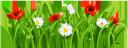 ромашка, мак, ромашковое поле, трава, ромашка луговая, полевые маки, chamomile, poppy, camomile field, grass, chamomile meadow, field poppies, kamille, mohn, kamillenfeld, gras, kamille wiese, mohnfeld, camomille, pavot, champ de camomille, herbe, pré de camomille, coquelicots de champ, manzanilla, amapola, campo de manzanilla, hierba, prado de manzanilla, amapolas de campo, camomilla, papavero, campo di camomilla, erba, prato di camomilla, papaveri di campo, camomila, papoula, campo de camomila, grama, prado de camomila, papoulas de campo, ромашкове поле, ромашка лугова, польові маки