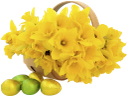 желтые нарциссы, корзина с цветами, желтые цветы, нарцисс, пасха, пасхальные яйца, цветы, флора, yellow daffodils, basket with flowers, yellow flowers, daffodil, easter, easter eggs, flowers, gelbe narzissen, korb mit blumen, gelbe blumen, narzisse, ostern, ostereier, blumen, jonquilles jaunes, corbeille de fleurs, fleurs jaunes, jonquille, pâques, oeufs de pâques, fleurs, flore, narcisos amarillos, cesta con flores, flores amarillas, pascua, huevos de pascua, narcisi gialli, cestino con fiori, fiori gialli, giunchiglia, pasqua, uova di pasqua, fiori, narcisos amarelos, cesta com flores, flores amarelas, narciso, páscoa, ovos de páscoa, flores, flora, жовті нарциси, корзина з квітами, жовті квіти, нарцис, паска, крашанки, квіти