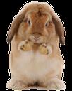 фауна, животные, кролик, animals, rabbit, tiere, kaninchen, faune, animaux, lapin, animales, conejo, animali, coniglio, fauna, animais, coelho