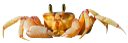 краб, членистоногие, ракообразные, десятиногие ракообразные, морские ракообразные, желтый краб, crab, arthropods, crustaceans, decapod crustaceans, marine crustaceans, yellow crab, krabben, arthropoden, krustentiere, decapodkrebstiere, meereskrustentieren, gelb krabbe, crabe, arthropodes, crustacés, crustacés décapodes, crustacés marins, crabe jaune, cangrejo, artrópodos, crustáceos decápodos, crustáceos marinos, cangrejo amarillo, granchio, artropodi, crostacei, decapodi, crostacei marini, granchi giallo, caranguejo, artrópodes, crustáceos, crustáceos decápodes, crustáceos marinhos, caranguejo amarelo