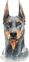 собака, доберман пинчер, домашние животные, фауна, dog, doberman pinscher, pets, hund, dobermann pinscher, haustiere, chien, animaux domestiques, faune, perro, mascotas, cane, animali domestici, cão, animais de estimação, fauna, пес, доберман пінчер, домашні тварини