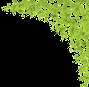ветка дерева, зеленая листва, рамка для фотошопа, зеленое растение, зеленый лист, tree branch, green foliage, frame for photoshop, green plant, green leaf, ast, grünes laub, rahmen für photoshop, grüne pflanze, grünes blatt, branche d'arbre, feuillage vert, cadre pour photoshop, plante verte, feuille verte, rama de árbol, follaje verde, marco para photoshop, hoja verde, ramo di un albero, fogliame verde, cornice per photoshop, pianta verde, foglia verde, galho de árvore, folhagem verde, moldura para photoshop, planta verde, folha verde, гілка дерева, зелене листя, рамка для фотошопу, зелена рослина, зелений лист